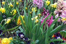 Jaro je tu ! Udělejme si ho veselejší!